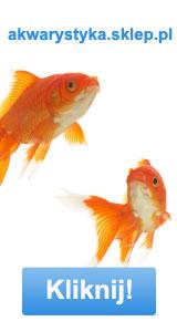"""oświetlenie akwarium <div class=""""content_justify""""><span class=""""content_bold"""">Możemy tam dostać przeróżne gatunki rybek, także te najbardziej popularne, takie jak nasz kreskówkowy gwiazdor. Nie zapominajmy jednak, że [TAG=hodowla"""