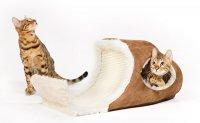 Koty Bengalskie