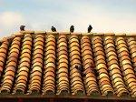 Kolorowy dach