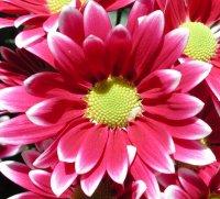 kwiaty14