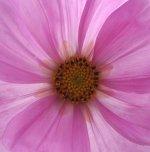 kwiaty13